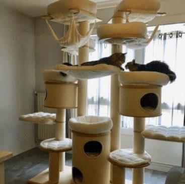 Chat jouant dans un arbre à chat