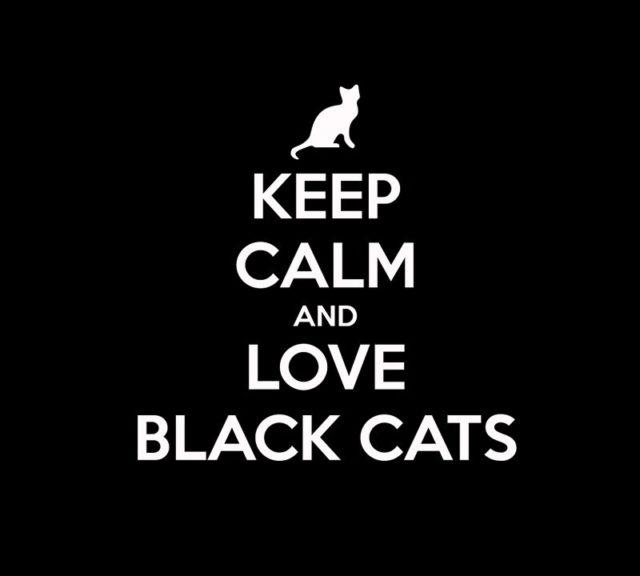 Journée Internationale du Chat Noir (avec la participation du chat norvégien noir bien sûr) – 17 août